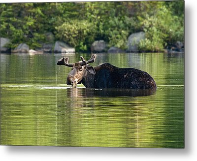 Metal Print featuring the photograph What Are You Looking At? by Gordon Ripley