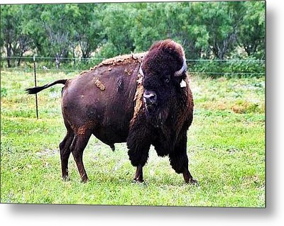 What Did You Say Metal Print by Monica Wheelus