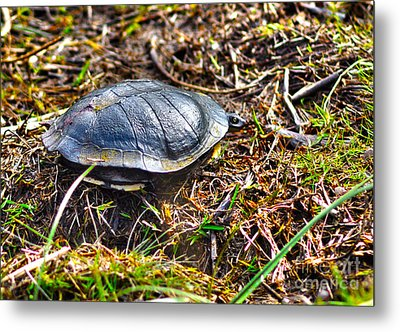 What Do You Want Now Metal Print by Joanne Kocwin
