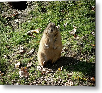 What I'm Not Fat Metal Print by Margaret Buchanan