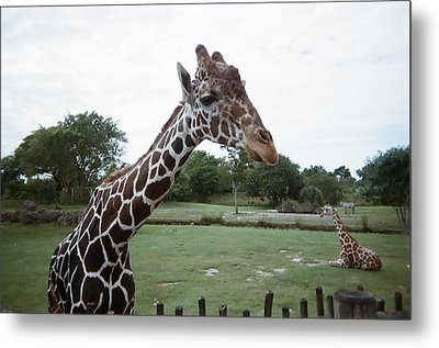 Whats Up Metal Print by Val Oconnor