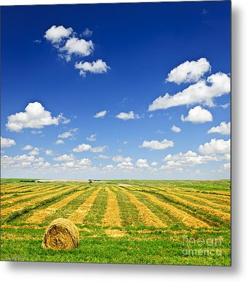 Wheat Farm Field At Harvest Metal Print by Elena Elisseeva