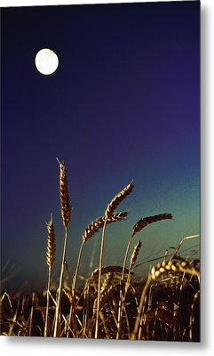 Wheat Field At Night Under The Moon Metal Print by The Irish Image Collection