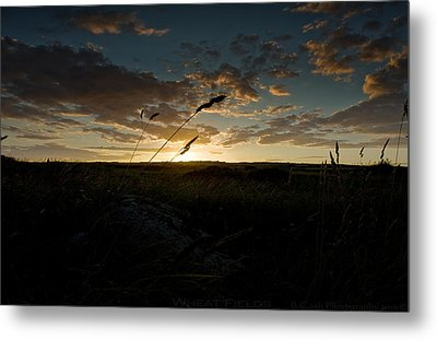 Wheat Fields  Metal Print by Beverly Cash