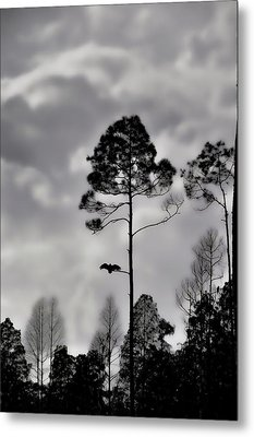 When The Air Gets Too Thin Metal Print by Jan Amiss Photography