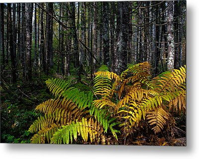Where The Ferns Grow Metal Print