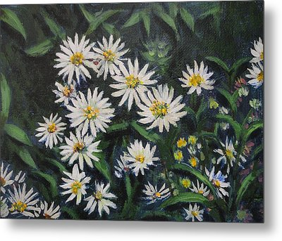 Whie Asters Metal Print by Usha Shantharam