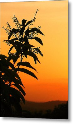 Whipple Hill Metal Print