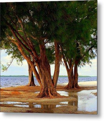 Whispering Trees Of Sanibel Metal Print by Karen Wiles