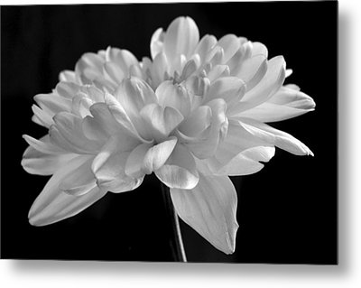 Whispering White. Metal Print by Terence Davis