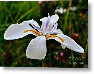 White African Iris Metal Print by Gwyn Newcombe