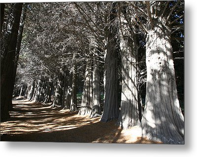 Metal Print featuring the photograph White Alley by Andrei Fried