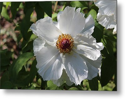 Metal Print featuring the photograph White Alluring by Bob Whitt