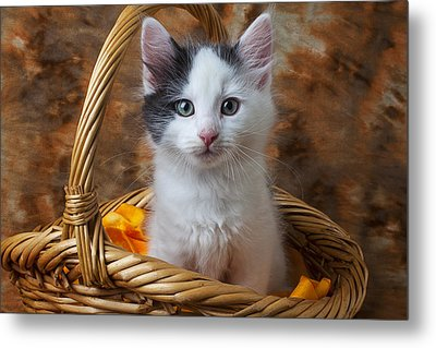 White And Gray Kitty Metal Print by Garry Gay