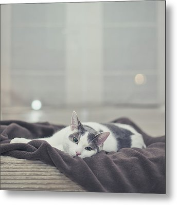 White And Grey Cat Lying On Brown Blanket Metal Print by Cindy Prins