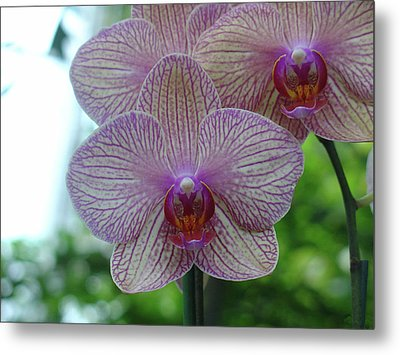 Metal Print featuring the photograph White And Pink Orchid by Charles and Melisa Morrison