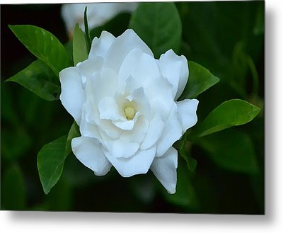 Metal Print featuring the photograph White Beauty by Rima Biswas
