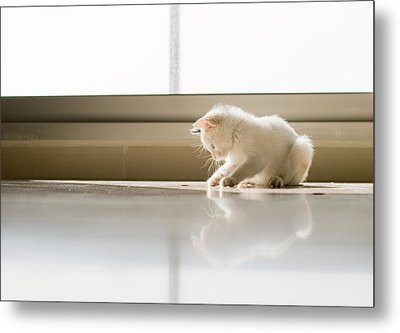 White Cat Playing On The Floor Metal Print by Jose Torralba