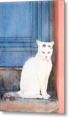 White Cat Metal Print by Tom Gowanlock