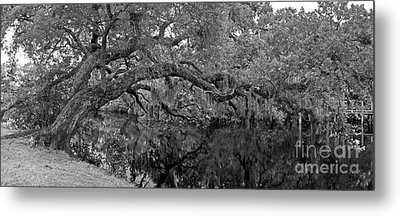 Metal Print featuring the photograph White City Oak Pano by Larry Nieland