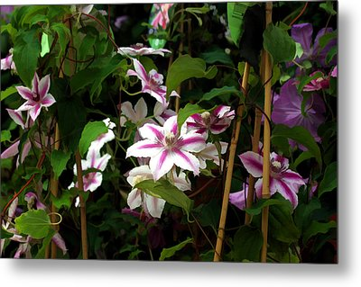Metal Print featuring the digital art White Clematis by Brian Davis