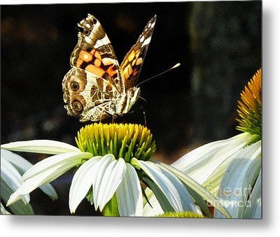 Metal Print featuring the photograph White Cone Flower Visit by Nava Thompson