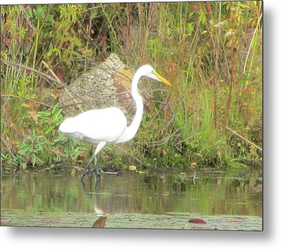 White Crane - Wildlife Metal Print by Susan Carella