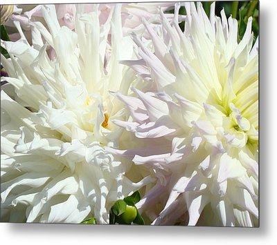 White Dahlia Flowers Art Prints Floral Metal Print by Baslee Troutman