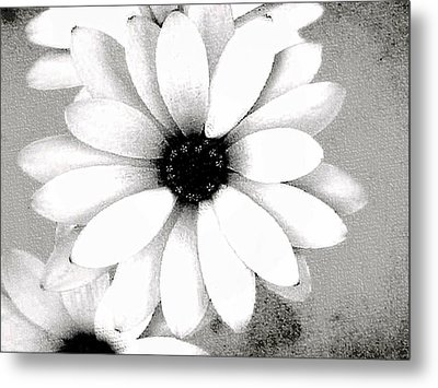 Metal Print featuring the photograph White Daisy by Tammy Espino