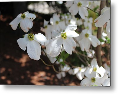Metal Print featuring the photograph White Dogwood by Bob Whitt