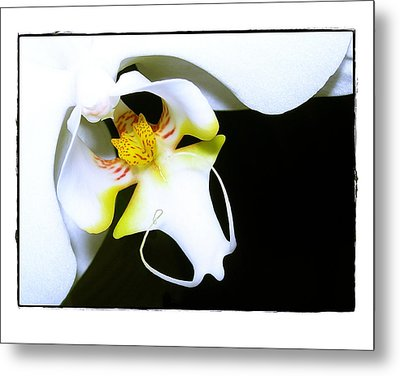 Metal Print featuring the photograph White Elegance by Judi Bagwell