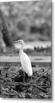Metal Print featuring the photograph White  by Elizabeth  Doran