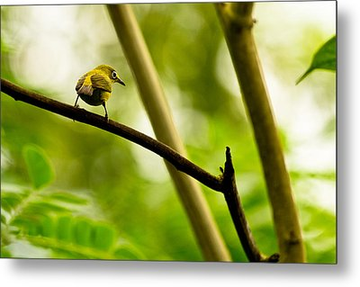 Metal Print featuring the photograph White-eye by Justin Albrecht