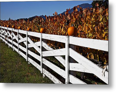 White Fence With Pumpkins Metal Print by Garry Gay