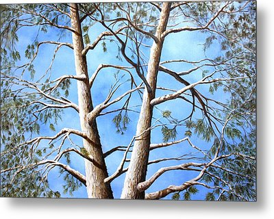 White Fir Tree Metal Print by Ron  Markowitz