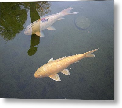 White Fish Yellow Fish Metal Print by Val Oconnor