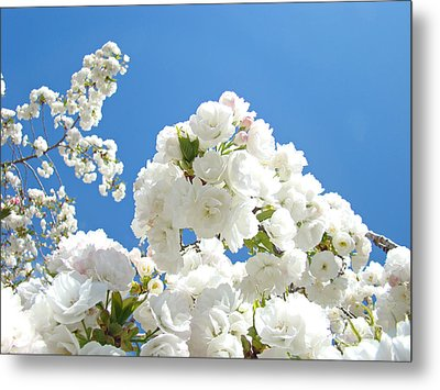 White Floral Blossoms Art Prints Spring Tree Blue Sky Metal Print by Baslee Troutman