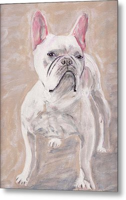 White Frenchie Metal Print