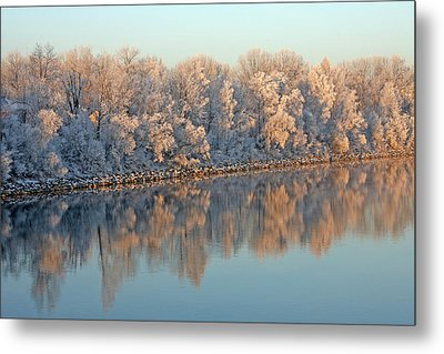 White Frost In Trees Metal Print by Ralf Kaiser