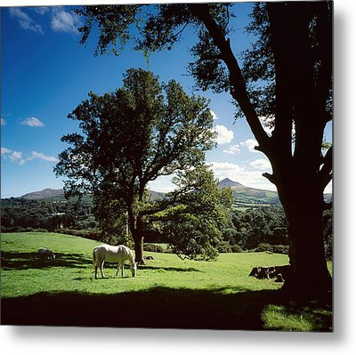 White Horse At Powerscourt, Co Wicklow Metal Print by The Irish Image Collection