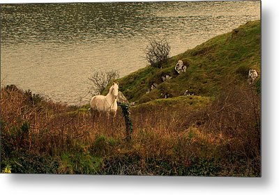 Metal Print featuring the photograph White Horse by Barbara Walsh
