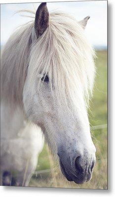 White Horse Metal Print by copyright by Elena Litsova Photography