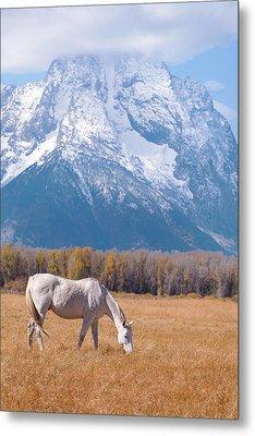 White Horse In Teton National Park Wy Usa Metal Print by Chasing Light Photography Thomas Vela