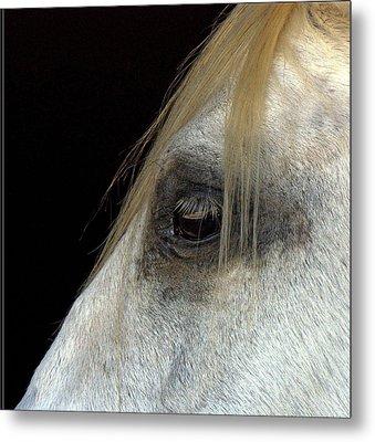 White Horse Metal Print by Marmimuralla