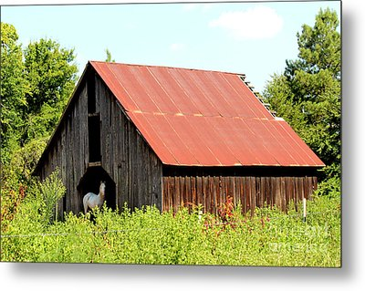 Metal Print featuring the photograph White Horse Waiting by Kathy  White