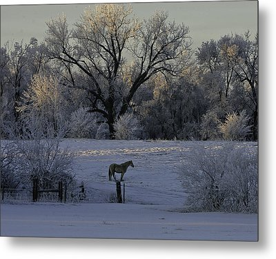 White Horse Winter Metal Print by Kenneth McElroy
