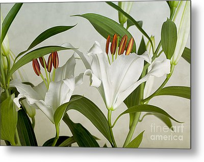 White Lilies Metal Print by Nailia Schwarz