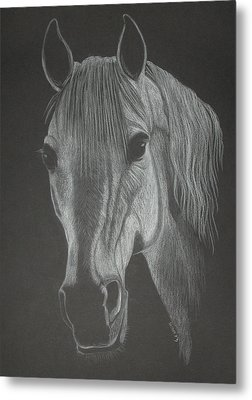 White Mare Metal Print by Stephanie L Carr