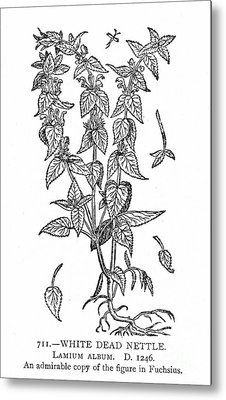 White Nettle Metal Print by Granger