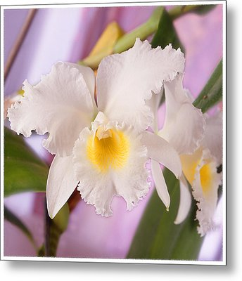 White Orchid Metal Print by Mike McGlothlen